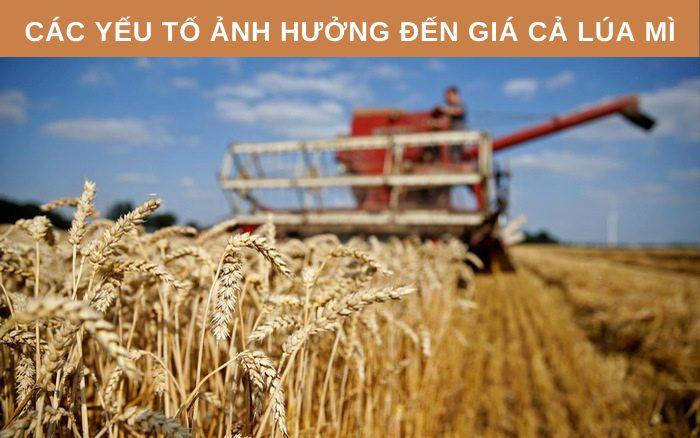 Các yếu tố ảnh hưởng đến giá lúa mì