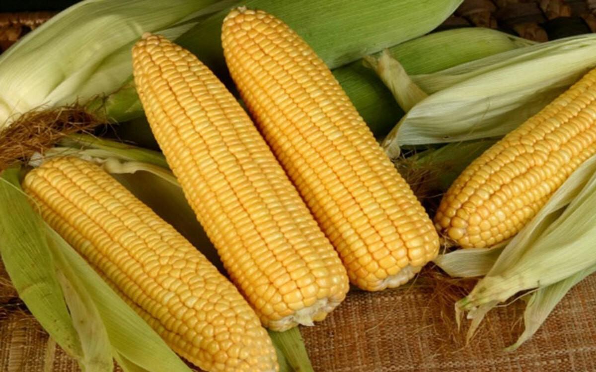 Ngô - mặt hàng nông sản CBOT