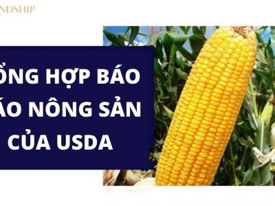 Báo cáo USDA
