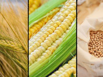 Giá đậu tương đang trong giai đoạn tích lũy, ngô và khô đậu lo ngại về nhu cầu tiêu thụ
