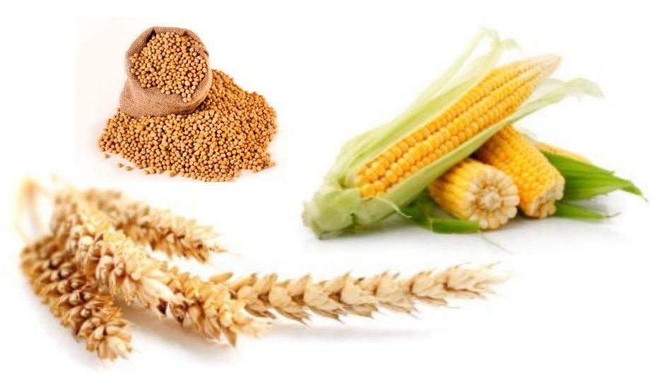 Giá Ngô, đậu tương, lúa mỳ