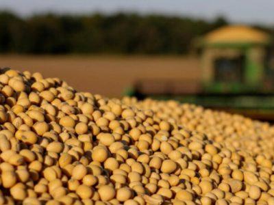 Ảnh hưởng của hạn hán ở Midwest sẽ tiếp tục là yếu tố hỗ trợ giá đậu tương