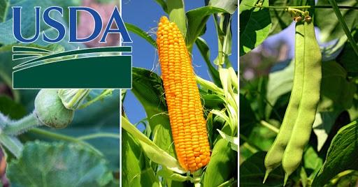 Giá nông sản tăng kịch trần khi báo cáo của USDA thấp hơn kỳ vọng