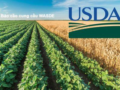 Lực bán áp đảo trên thị trường nông sản sau báo cáo WASDE tối qua