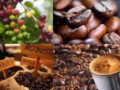 Thị trường cà phê đang trong đợt điều chỉnh giảm